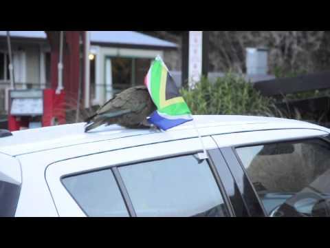 Forest & Bird, Smart NZ Bird Video Competition - 2014
