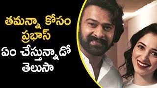 Prabhas Guest Role In Tamannah Movie | Latest Telugu Movie News