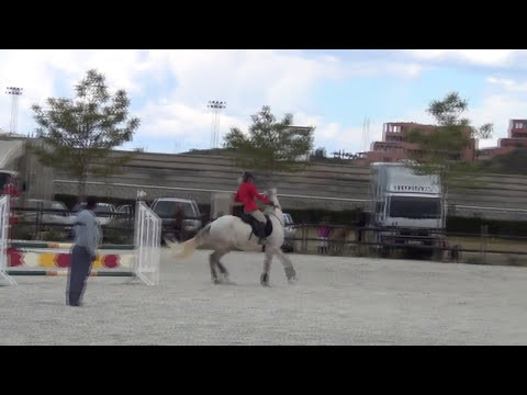 Jumping Competition - Hipodromo - Impossible!
