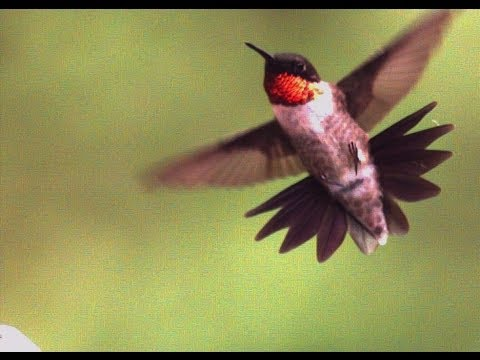 Nasty Humming Bird UltraSlo Compilation