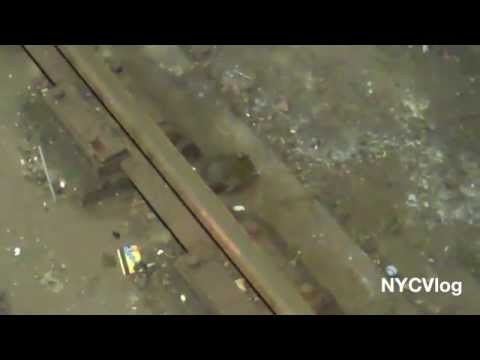 Giant Rat in New York City Subway