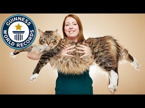 El gato más grande del mundo