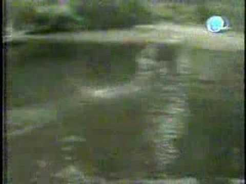 americas funniest animal video amazing cat walk in the water