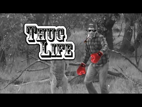 Man punches a Kangaroo | Thug Life