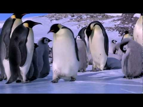 Penguin Fail - Best Bloopers from Penguins Spy in the Huddle (Waddle all the Way)