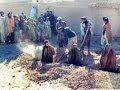 جرائم طالبان النساء أخبار الآن