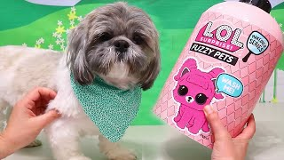 Opening LOL Fuzzy Pets with Mr. Hamilton ! Toys and Dolls Pretend Play for Kids | SWTAD