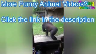 Funny Animals Scaring People! Hilarious! Funniest Animals Video 2019