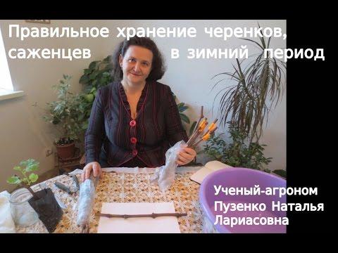 Заготовка побегов для перепрививки и хранение черенков