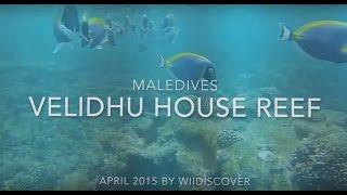 Velidhu House Reef (Maledives)