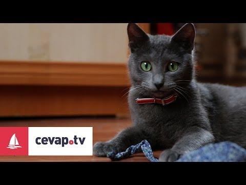 Kedilerin dökülen tüyleri insan sağlığı açısından tehlikeli midir?