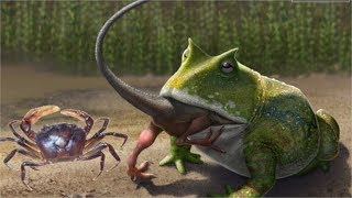 Đào Hang Cua Bắt Ếch Đồng Khổng Lồ .Chuyện Lạ ! Thật Khó Tin Ếch Sống Vs Cua .Catch Frog ,Crab