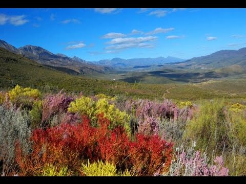 Fynbos mountain landscapes of the South African leopard, caracal & Cape biodiversity expedition