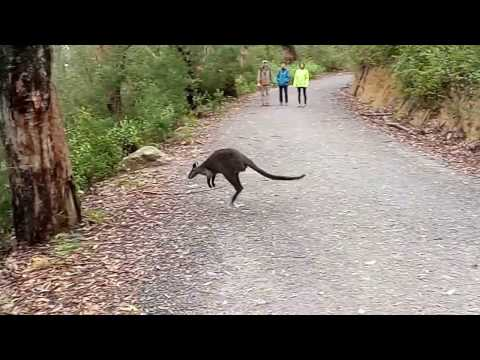 Vlog 15 Avustralya Hayvanlari 1