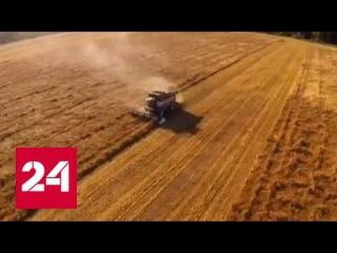 Россию ждет рекордный урожай зерна