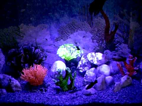 Image Result For Marine Aquarium Aquascaping