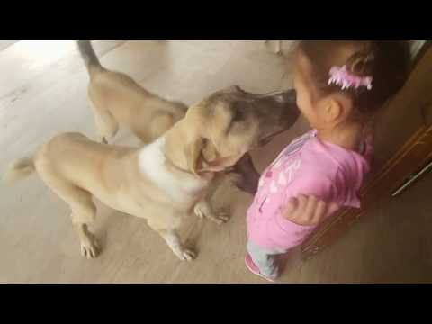 3 yavru kangal köpeği ve elif ,eğlenceli çocuk videosu