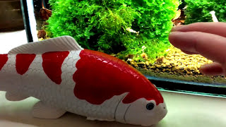 Cherry shrimp And Crystal Red Shrimp Increase Survival