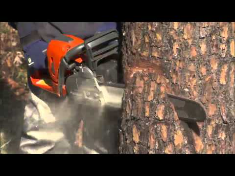 Tree Cutting - How To Fell A Tree Using A Chainsaw video