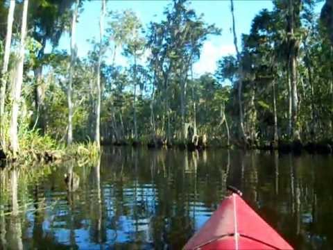 Kayaking the Withlacoochee river - Yankeetown, FL