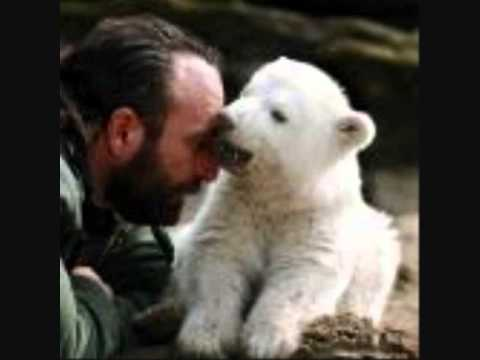 Eisbär Knut tot  polar bear knut RiP 2. version with lovely joop-picture