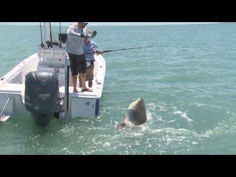 Big Bull Shark Boca Grande FL