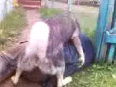 Смотреть онлайн бесплатно в качестве Собака тыкает пьяного бомжа.3gp 1080p