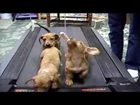 面白・かわいい犬動画集