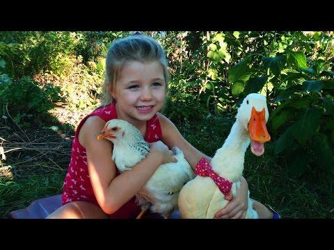 Как выросли наши цыпленок с утенком На даче у бабушки
