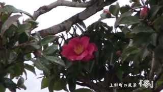 上郡町の四季