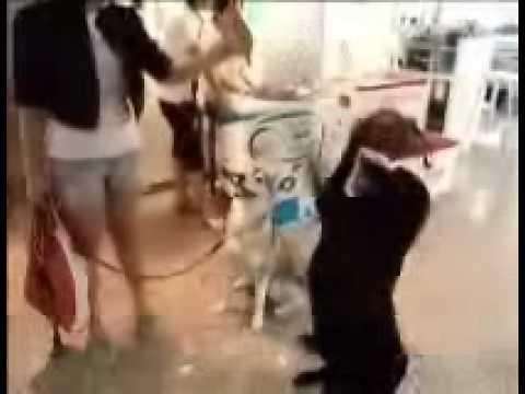 Slimfit : Thonglor Pet Rehab Center : TPRC