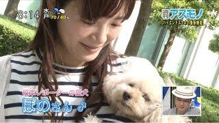 「榎本麗美 犬」の画像検索結果