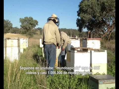 Apicultura profesional - apicultura profissional -  professional beekeeping