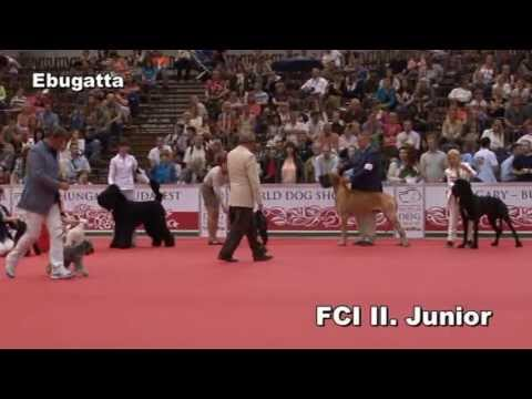 World dog Show 2013. 05. 17. BIS