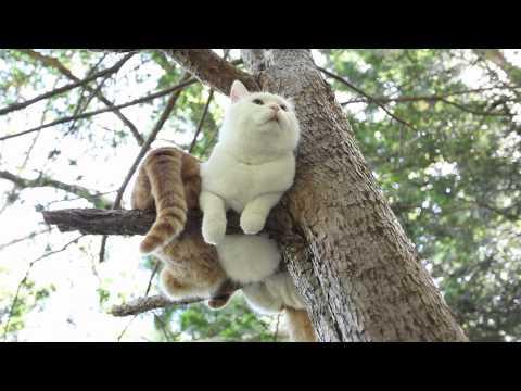 木の枝の上でくつろいでい...