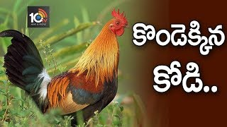 కొండెక్కిన కోడి | Why Chicken Rates Huge Increase..? | #Special Story