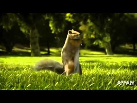 Kit Kat Squirrel Ad 2010 India Hd video