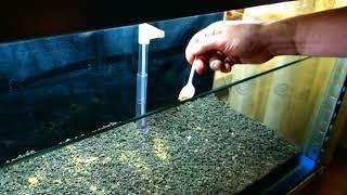 Zakładam akwarium Sulawesi metodą SL-Aqua