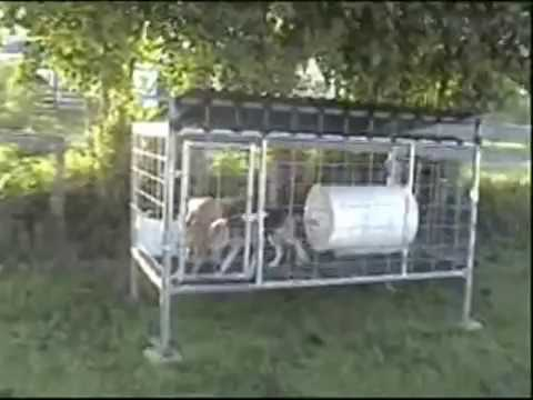 How To Setup Your Own Dog Kennels