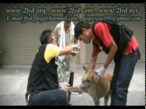 Dog rescue 191 Nasal cartilarge tumor เพชรเกษม77