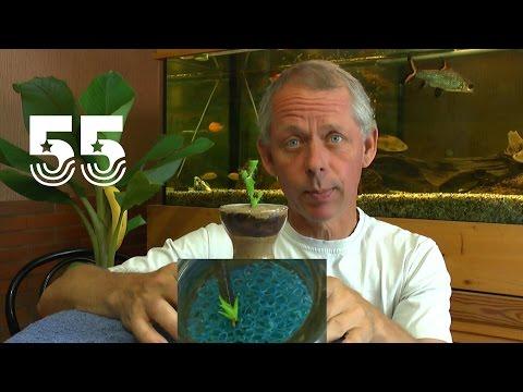 Die Sämlinge und wie geht es weiter mit den Exoten und anderen Pflanzen Teil 55