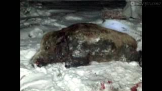 Polowanie zbiorowe Driven hunt Wild Boar Hunt Chasse au Sanglier Schwarzwild Jagd Drevjakt Vildsvin3