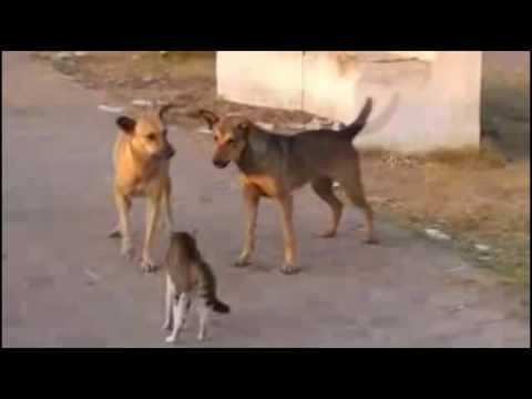 КОТЫ НАПАДАЮТ НА СОБАК   Crazy Cat Attacks Dog   Подборка приколов #4   Опасные