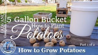 How to Grow Potatoes in a 5 Gallon Bucket (Part 1 of 2)