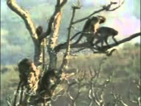 Header of macacus