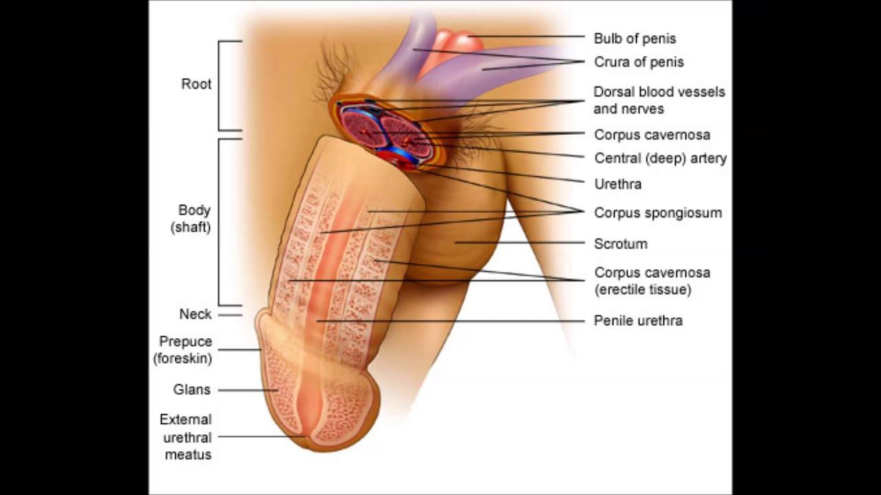 смазки для дрочения и увеличения пениса