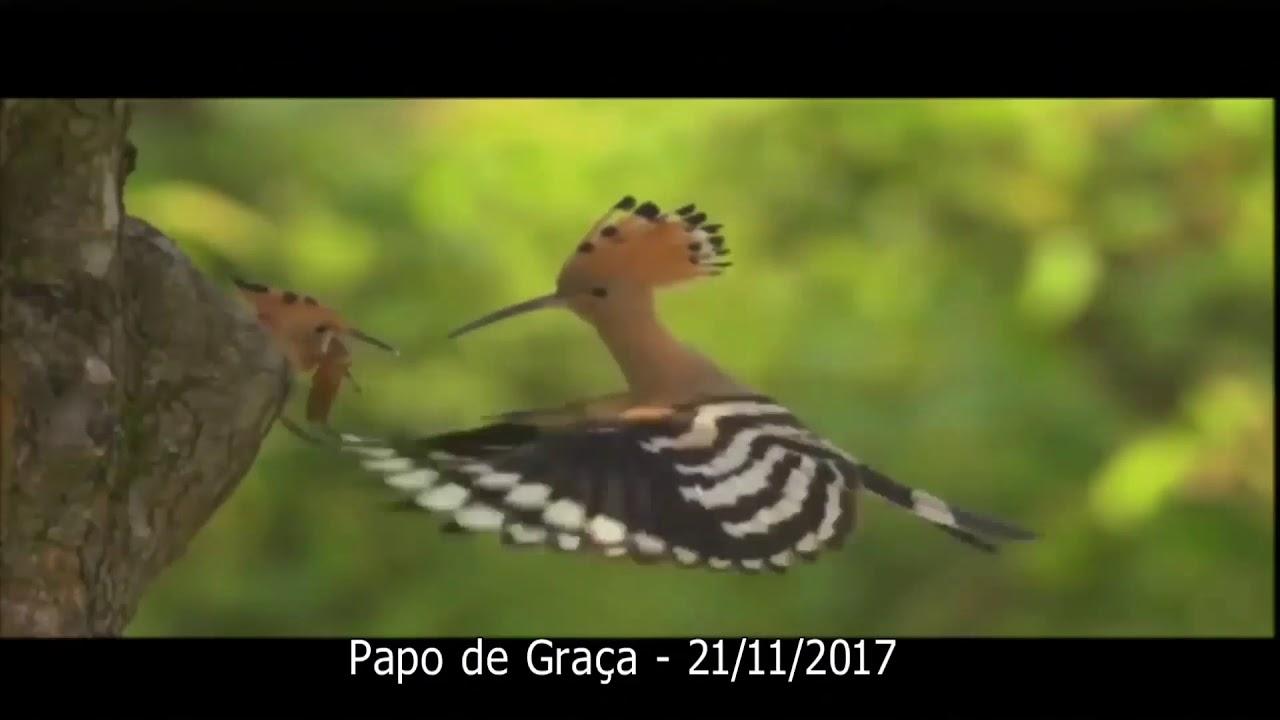 Estes são os seres que preservam ainda os instintos da Criação vivos no planeta!