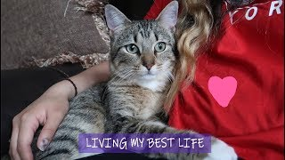 20 Fun Facts about Ollie + Update | Stray Cat Living His New Life Indoors