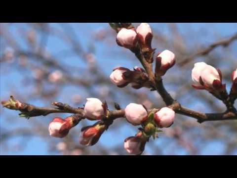 Вивальди Антонио - Весна