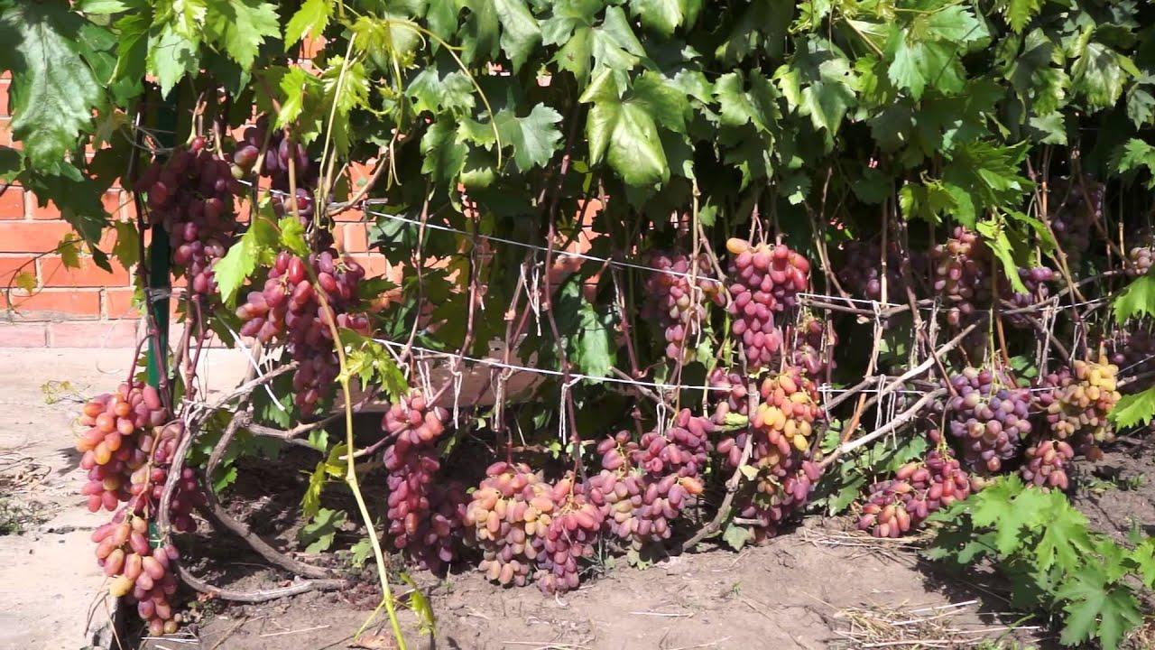 Агротехника выращивания лука севка - Саду рад! 70